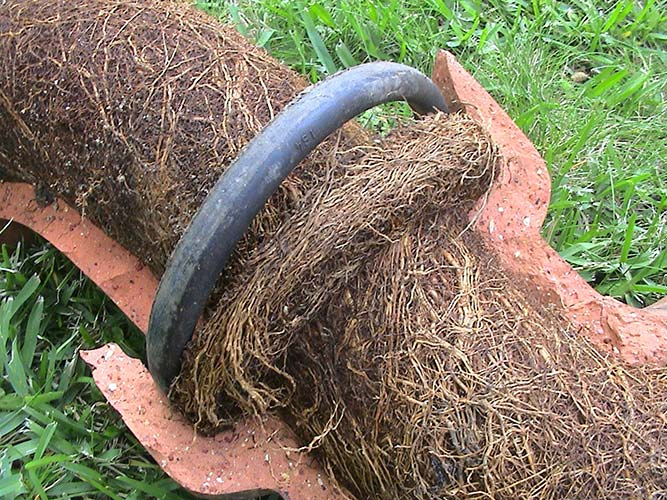 Root Removal Tree Root Amp Root Cutting Drainage Consultants